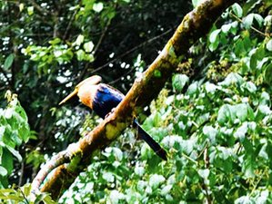 5 Day Cuyabeno Wildlife Experience in Quito