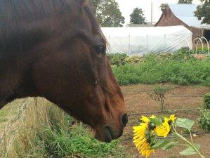 10 Day Detox Retreat on an Organic Farm in Eugene, Oregon