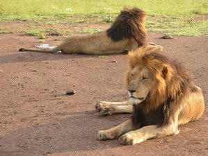 3 Days Private Amboseli National Park Safari in Kenya