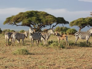 7 Day Rift Valley Lakes and Masai Mara Safari in Kenya