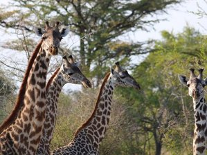 3 Days Guided Safari in Selous Game Reserve, Tanzania