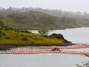 8-Daagse Northern Circuit Safari in Arusha, Tarangire, Manyara, Serengeti, en Ngorongoro, Tanzania