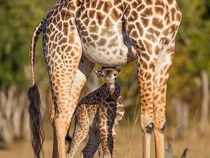 5 Days Serengeti and Ngorongoro Crater Private Safari in Tanzania