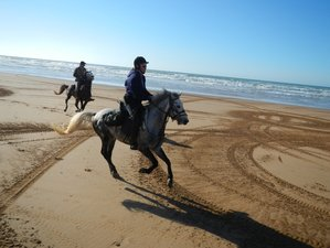 8 Day Berber Trail Horse Riding Holiday in Essaouira