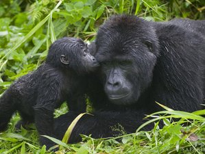 13 Days Predators and Primates Safari In Uganda