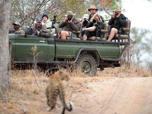 9 días de safari de fotografía de grandes felinos en la Reserva Natural Sabi Sand, Sudáfrica