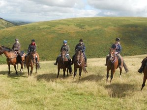 7 Days Cattle Drive and Western Riding Holiday in Dartmoor, UK