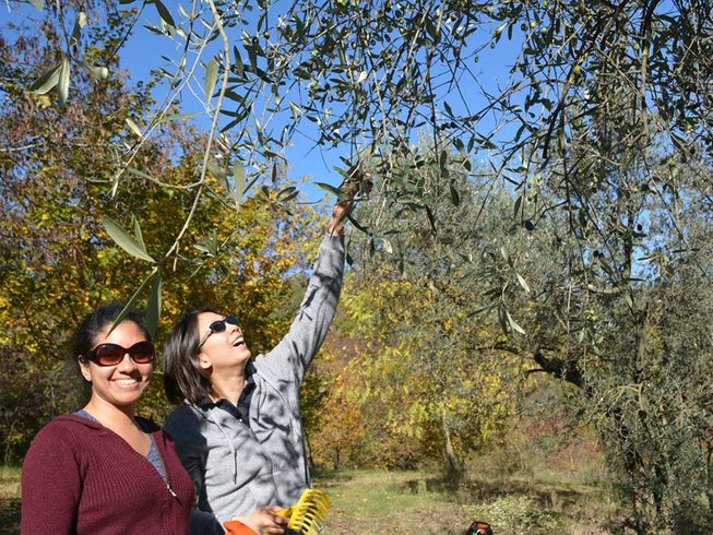5 Days Cooking Holidays & Olive Harvest Tour Italy