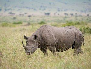 7 Days Amboseli, Hell's Gate, Lake Nakuru and Masaai Mara National Reserve Group Safari , in Kenya