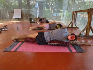 50 Hours Yin Yoga Teacher Training Course in Dharamshala