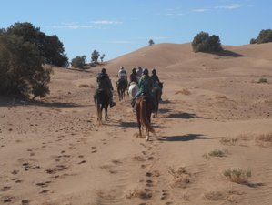 8 Days The Desert Trail Horse Riding Holiday in Morocco