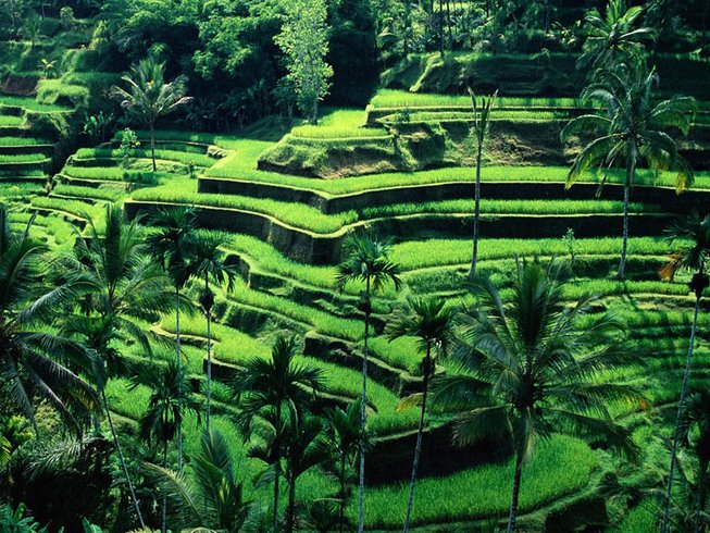 10 Days Basic Detox and Yoga Holiday in Bali, Indonesia