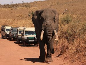 6 Days Thrilling Safari in Kenya