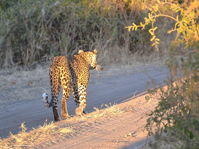 4 Days Mokoro Safari in Botswana