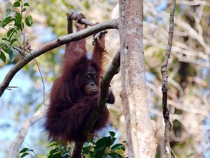 5 Day Orangutan Safari in Central Borneo, Indonesia
