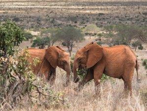 7 Day Exclusive Wildlife and Yoga Retreat, Kenya, Tsavo East National Park