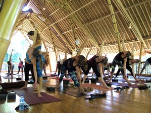 29 Days 200hr Hatha Yoga Teacher Training in Bali
