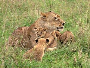 5 Days Lake Nakuru and Maasai Mara Safari in Kenya