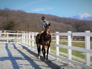 7 Day Learn to Ride Horse Riding Camp in Sarajevo Canton