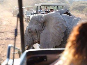 6 Days Northern Circuit Camping Safari in Tanzania
