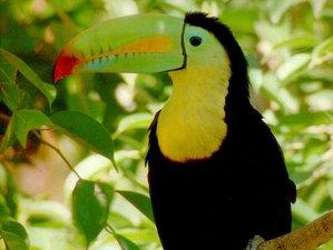 5 Day Wonderful Amazon Wildlife Tour in Maynas, Loreto