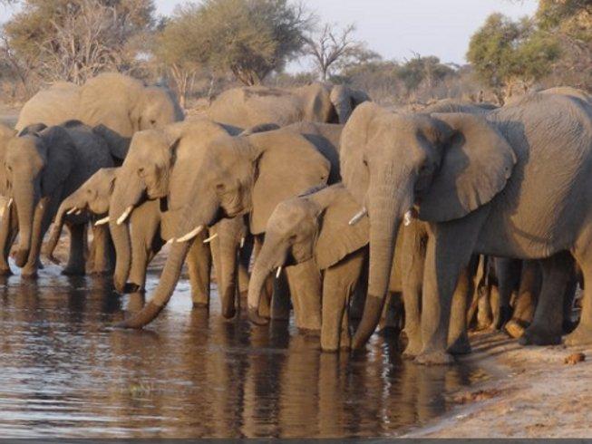 10 Days Adventure Safaris in Kasane, Botswana