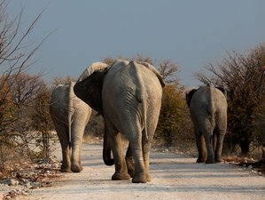 8 Days Cruise Safari in Botswana and Namibia