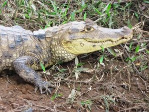 5 Day Incredible Cultural and Wildlife Tour in Costa Rica