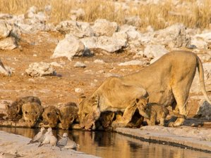 15 Days Namibia Highlights Accommodated Tour and Safari