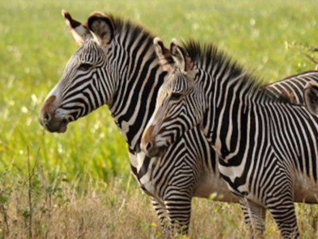 11 Days Gorilla Safari in Uganda and Rwanda