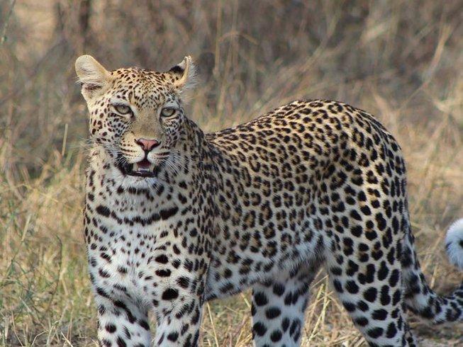 22 Days Walking Safari South Africa, Zambia, Malawi, and Mozambique