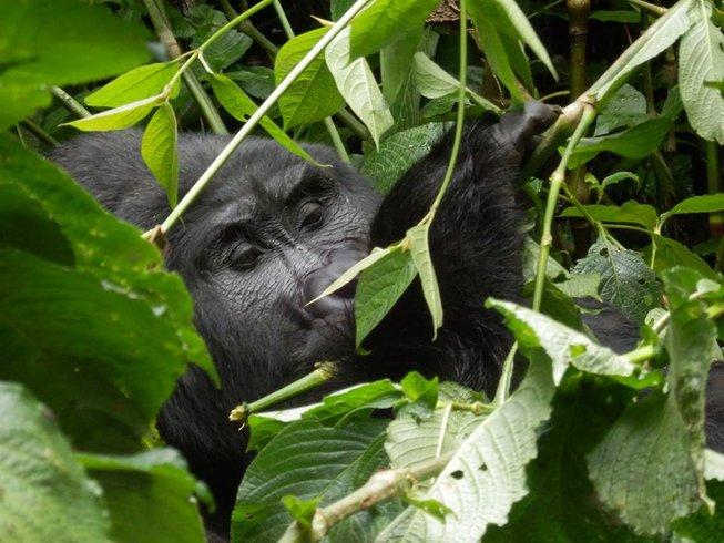7 Days Gorillas Trekking and Savanna Safari in Uganda