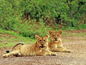 3 Days Murchison Falls Natioanl Park Safari Tour in Uganda