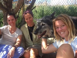 3 Days Weekend Community Gathering with Wolves Meditation and Yoga Retreat in Colorado, USA