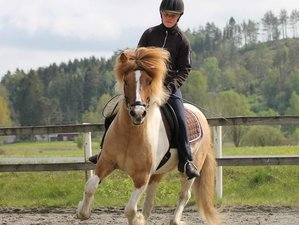 2 Days Weekend Course with an Icelandic Horse Riding Holiday in Veddige, Sweden