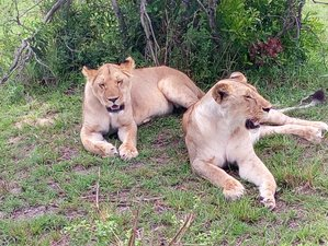 7 Days Best of Wildlife Guided Safari in Kenya