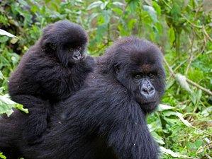10 Days Unforgettable Gorilla and Chimpanzee Trekking Safari in Uganda