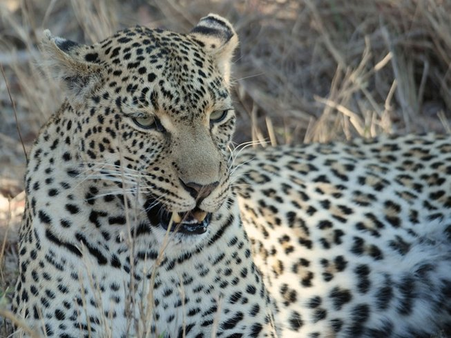 2 Days Big Five Safari South Africa