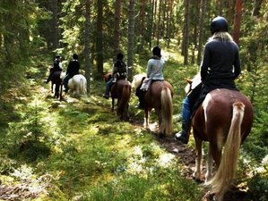 5 Days Horse Riding and Yoga Retreat in Sweden