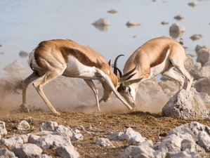 6 Days Namib Desert and Etosha Camping Safari in Namibia