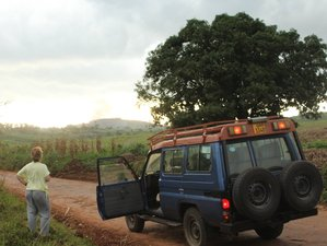 14 Days Chimps and Wildlife Safari in Kampala, Uganda