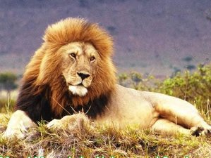 5 Days Big-Five Safaris in Kenya