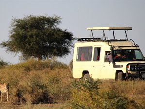 Planning: All Inclusive Safaris
