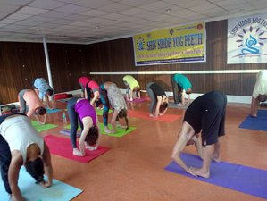 28 Days 200-Hour  Vinyasa Yoga Teacher Training in Rishikesh