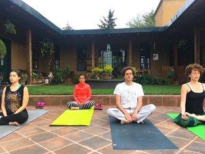 5 días retiro de yoga intensivo, Ayurveda y plantas medicinales en Tulum, México