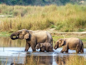 8 Day Jungle Wildlife Tour in Nepal