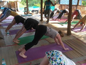 7-Daagse Detox Yoga Retraite in India