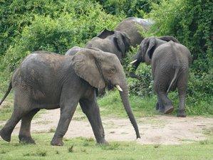 5 Days Wildlife and Gorilla Tracking Safari in Uganda