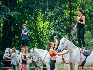 13 Day Equine Yoga Teacher Program in Costa Rica's Caribbean Coast, Puerto Viejo, Limon
