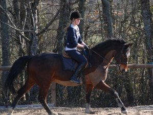 7 Days Exclusive Horse Riding Training Near Bordeaux, France